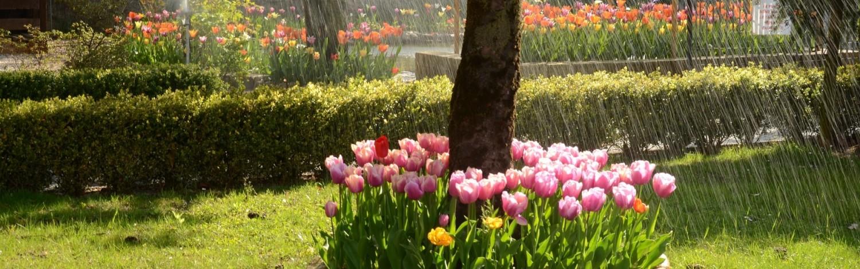 giardino willy gemona fvg 1-min