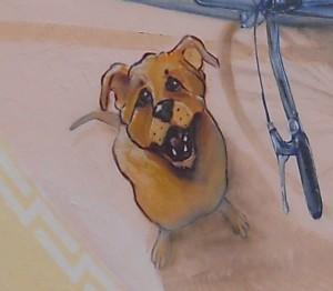 willy dog gemona friuli