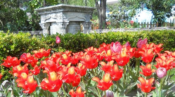 Parco e giardino